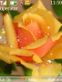 Yellow Rose themes