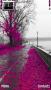 Pink Tree  themes