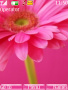 Pink Petals themes