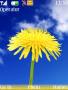 Yellow Flower themes