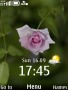 Rose Clock themes
