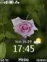 Rose Clock themes