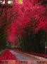 Pink Autumn Nature themes