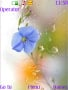 Blue Flower Wet Screen S40 Theme themes