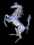 Horse Ve3 wallpapers