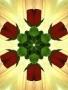 Rose Bud wallpapers