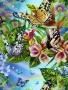 Butterflya wallpapers