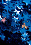 Stars Apple IPhone Wallpaper wallpapers