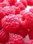 Rasberries wallpapers