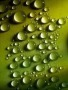 Green Drops wallpapers