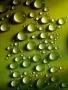 Green Drops wallpapers