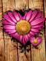 Heart Flower wallpapers