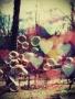 Bubbles Heart wallpapers