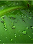 Cute Green Drops wallpapers