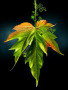3D Leaf wallpapers