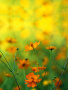 Yellow Flower wallpapers