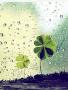 Drops Green Flower wallpapers