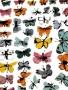 Butterflies Colors wallpapers