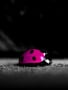 Pink Ladybird Free Mobile Wallpapers