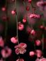 Pink Cute Flowers wallpapers