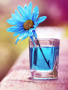 Flower On Blue wallpapers