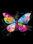 Color Butterfly wallpapers