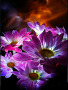 3D Nature Flower wallpapers
