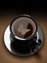 Brown Butterfly Coffee wallpapers