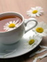Chrysanthemum Tea wallpapers