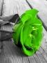 Green Rose wallpapers