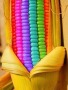 Lovely Colorful Corn wallpapers