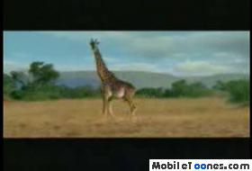 Africa Mobile Video