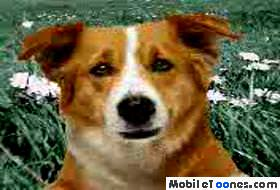 Dog Mobile Video