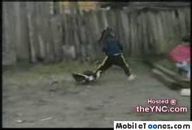 Funny Birds Mobile Video