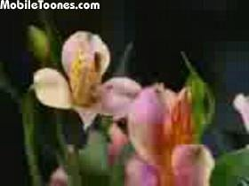Flowers Song Mobile Video