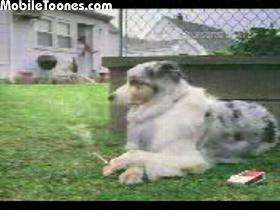 Dog Smoking Mobile Video